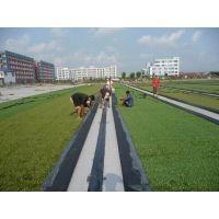 厂房屋顶绿化 景观塑料草人造草坪 幼儿园室外专用20MM塑料草