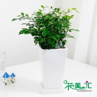 天河区绿物出售盆栽花卉订购平台