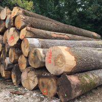 德国金威木业进口法国白橡木 ABC级 原木 橡木 实木 进口木材 欧洲材 锯切材 板材 木板