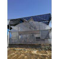财政局补贴教研用无土栽培温室大棚阳光板材质顶部物联网设计安装施工厂家