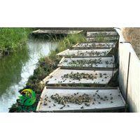 湖北天泽惠丰生态农业发展有限公司:青蛙养殖基地的建设方法