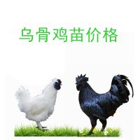 育种孵化场乌鸡苗,批发乌鸡苗价格优惠,运输成活率高长速快