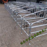 亳州高培定位栏一组十个位单体母猪保胎栏