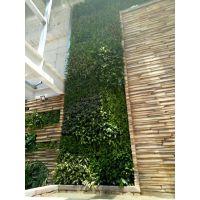 真植物墙体绿化 室内电视背景墙植物设计 商场墙体绿化