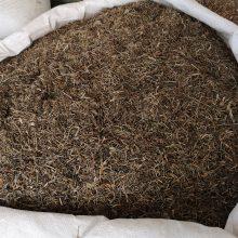 猪屎草功效与作用 鹅不食草哪里可以购买多少钱一公斤