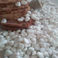 白石子 白色鹅卵石 园艺装饰铺面鱼缸造景天然白色水草石