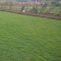 聚乙烯仿真植物墙草坪网 绿色地毯装饰假绿化草皮网 仿真户外跑道人造草坪