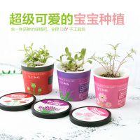 2312 创意微景观迷你可爱盆栽小盆景 办公室桌面生态植物种子花卉