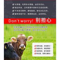 肉牛后期快速催肥预混料 肉牛快速催肥增重饲料