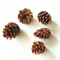 厂家直销启航天然松果 圣诞树装饰挂件室内装饰松果落叶松果