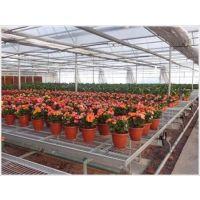 移动苗床-花卉种植-热镀锌苗床厂家-华耀农业设施