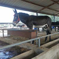 德州驴多少钱一头 江西大型肉驴养殖场出售