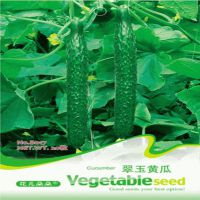 批发瓜果蔬菜翠玉黄瓜种子 阳台菜园  20粒种子  量大按斤批发