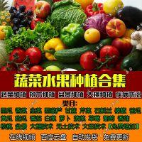 蔬菜水果盆景花草种植育苗防治大棚设计管理技术视频教程文档大全