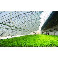 水肥一体化自动控制系统 菲利科智慧农业