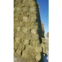 黑龙江省东北羊草捆厂家出售马场级青干草天然牧草披肩草是牛 羊马吃的高蛋白牧草饲料