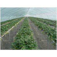无土栽培草莓槽-新型农业种植-河北华耀