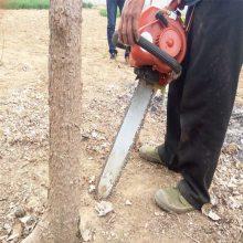 进口发动力链条挖树机 圆形土球轻松铲树机 加厚铲头式挖树机