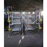 三层立式肉鸡笼 镀锌层叠肉鸡笼,养鸡设备厂家直销