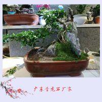 广东青龙石厂家 小英石多少钱一吨 鱼缸微景观造景石图片