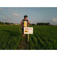 腐植酸水溶肥 水稻 小麦 花生增产套餐 昆仑风厂家