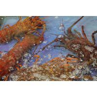 上海龙虾进口报关公司