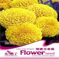 花卉种子 花种子 明黄万寿菊 观花花卉 (30粒)量大按斤批发