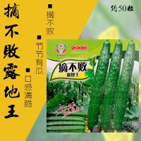 爬藤带刺长黄瓜种子 摘不败露地王黄瓜种子批发 旱黄瓜地黄瓜种