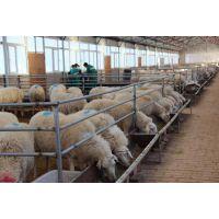 繁殖母羊专用饲料,供应厂家