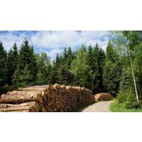 汇生林业投资专家示范科学补种