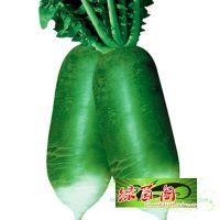 生吃水果萝卜种子甜水青萝卜沙窝萝卜口感脆里外多农家蔬菜种子