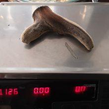 正品鹿茸一个多少钱@斑龙珠市场批发价格哪里可以购买多少钱一公斤