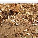 白蚁多杀不完要找杀虫公司就找巨仁圣环境公司消灭害虫消灭烦恼