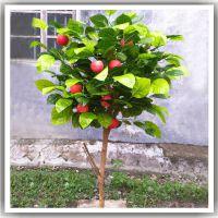 松涛仿真植物盆景批发 玻璃钢仿真苹果树盆栽可定制