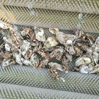 供应海产品贝壳类清洗机 海螺毛辊清洗机 型号齐全富扬制造