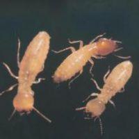 【灭白蚁服务】自贡灭白蚁公司、自贡灭白蚁服务