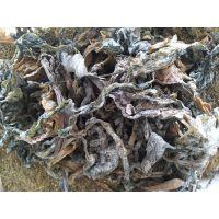 海参饲料各类的海藻类都能加工
