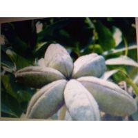 牡丹种苗种植方法,基地批发价格,种植效益,