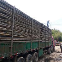 大量批发香菇架竹竿 4米5米6米竹梢