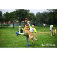 塘沽专业宠物犬培训-东方名仕(在线咨询)