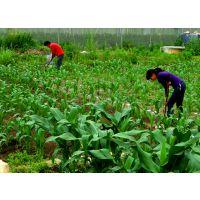 河北玉米田杀灭玉米螟特效杀虫药肥厂家出售价