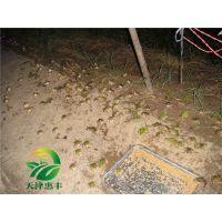 湖北天泽惠丰生态农业发展有限公司:青蛙养殖真的是炒作吗?