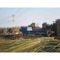 4-8米大棚竹竿,2-3米菜架杆,菜架竿批发