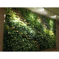 杭州枫桓特色植物墙