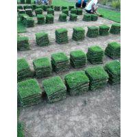 --贵州草皮一捆多少平方米-