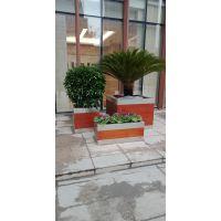 西安花卉租赁哪家好,西安嘉禾苗圃专业租赁绿植二十年