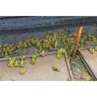 青蛙养殖成本高吗?