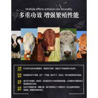 养牛的饲料 母牛预混料 养母牛怎么喂