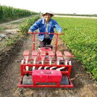 蔬菜香菜播种机 供应香菜播种机厂家