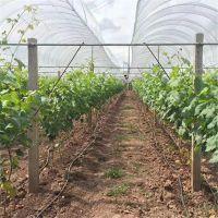 农业节水葡萄水肥一体化设备滴灌工程